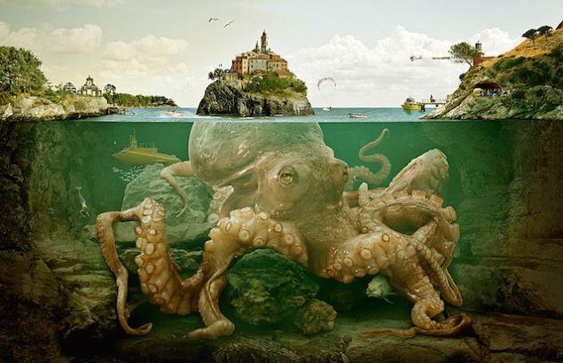 octopus island