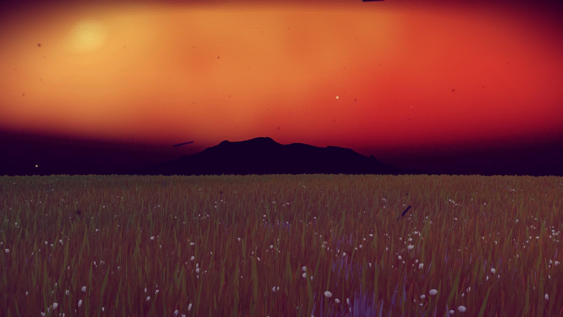 Sunset Neochadwickia